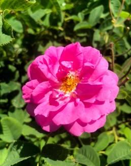 图片包含 植物, 花, 户外, 草  描述已自动生成